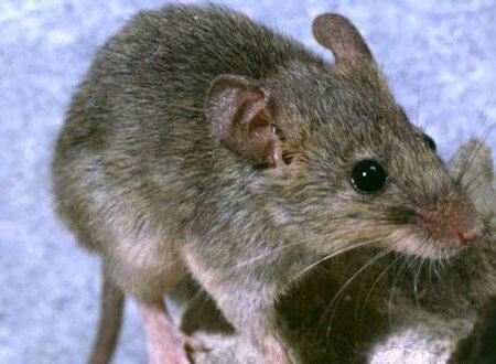 شركه مكافحه فئران بالقطيف