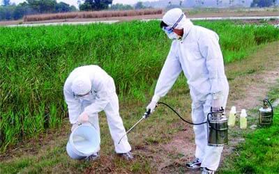 شركه رش مبيدات بالجبيل