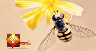 النحل وطرق حياته