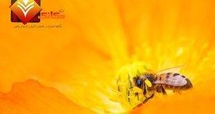 تعلم من النحل