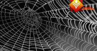 العنكبوت صديق الإنسان